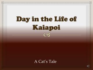 Day in the Life of Kaiapoi