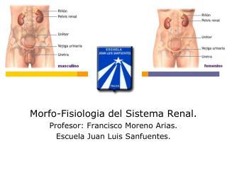 Morfo-Fisiologia del Sistema Renal. Profesor: Francisco Moreno Arias.
