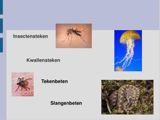 Insectensteken
