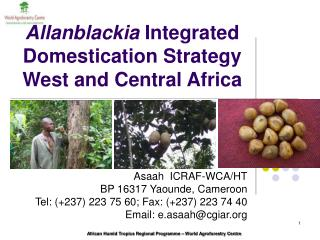 Allanblackia  Integrated Domestication Strategy West and Central Africa