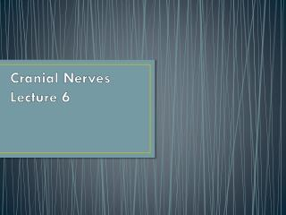 Cranial Nerves Lecture 6