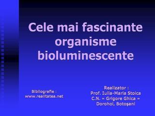 Cele mai fascinante organisme bioluminescente