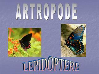 ARTROPODE