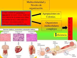 Multicelularidad y Niveles de organización.