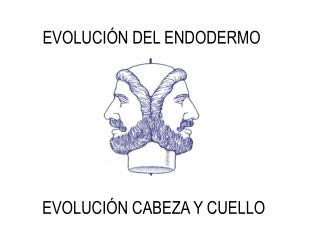 EVOLUCIÓN DEL ENDODERMO