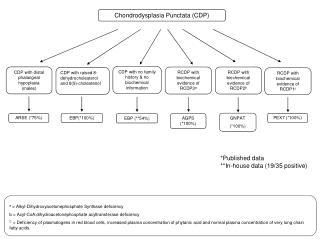 Chondrodysplasia Punctata (CDP)