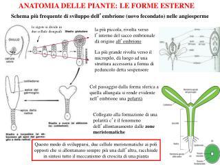 ANATOMIA DELLE PIANTE: LE FORME ESTERNE