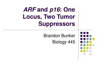 ARF  and  p16 : One Locus, Two Tumor Suppressors