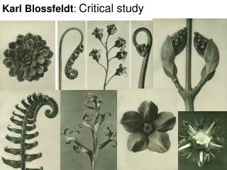 Karl Blossfeldt :  Critical study