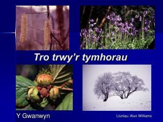 Tro trwy'r tymhorau