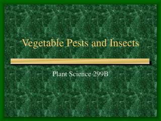 Vegetable Pests and Insects