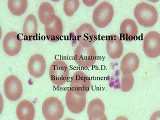 Cardiovascular System: Blood