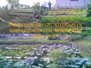PROYECTO DE GRANJAS INTEGRALES EN SEDES EDUCATIVAS DEL  MUNICIPIO DE SILVIA CAUCA
