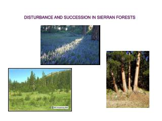 DISTURBANCE AND SUCCESSION IN SIERRAN FORESTS