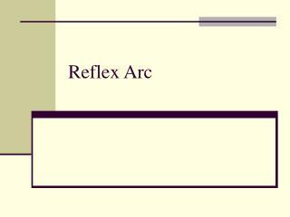 Reflex Arc