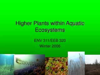 Higher Plants within Aquatic Ecosystems