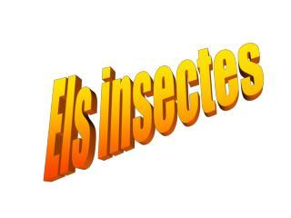 Els insectes