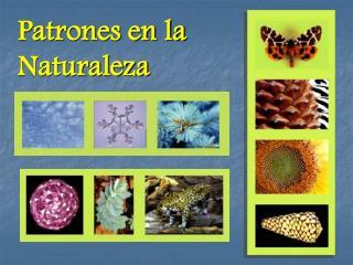 Patrones en la Naturaleza
