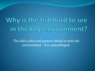 Why is the fish hard to see in the kelp environment?