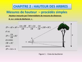 CHAPITRE 2 : HAUTEUR DES ARBRES