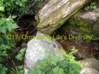 C17- Organizing Life�s Diversity