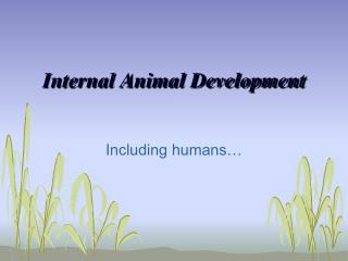 Internal Animal Development