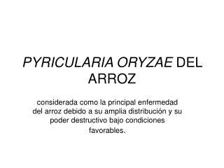 PYRICULARIA ORYZAE  DEL ARROZ