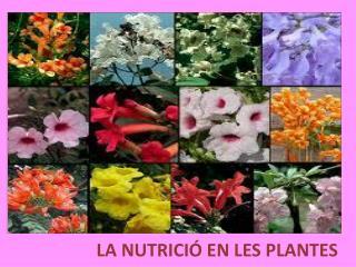 LA NUTRICI� EN LES PLANTES