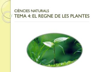 CI�NCIES NATURALS TEMA 4:  EL REGNE DE LES PLANTES