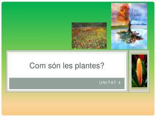 Com són les plantes?