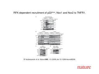 B Yazdanpanah  et al. Nature 000 ,  1 - 5  (2009) doi:10.1038/nature08 206