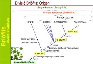 Divisió Briòfits: Origen