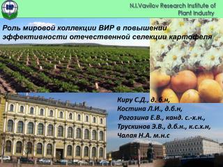 Роль мировой коллекции ВИР в повышении  эффективности отечественной селекции картофеля