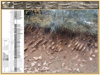 Una nuova scoperta. Le ammoniti.  Andrea Di Cencio – andrea.dicencio@gmail