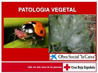 PATOLOGIA VEGETAL