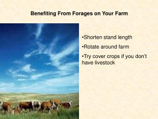 Benefiting From Forages on Your Farm