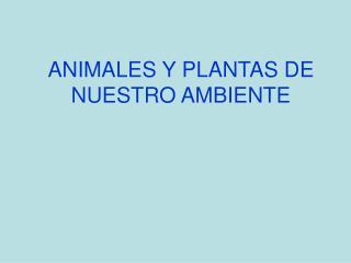 ANIMALES Y PLANTAS DE NUESTRO AMBIENTE