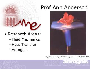 Prof Ann Anderson