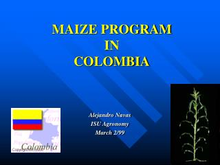 MAIZE PROGRAM IN COLOMBIA