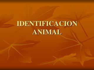IDENTIFICACION ANIMAL