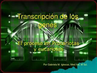 Transcripci�n de los genes