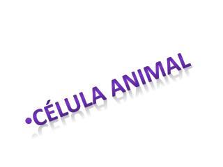 C�lula animal