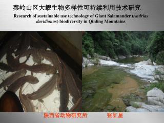 秦岭山区大鲵生物多样性可持续利用技术研究
