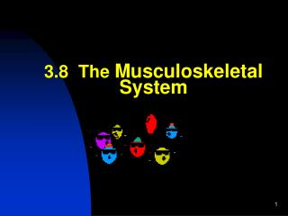 3.8  The  Musculoskeletal System