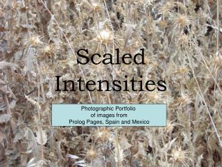 Scaled Intensities