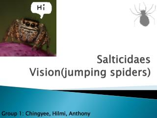 Salticidaes  Vision(jumping spiders)