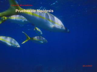 Curso de Bioestad�stica.