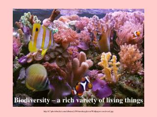 i7.photobucket/albums/y299/monkeygluver/Wallpaper-coral-reef.jpg