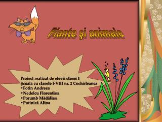 Plante şi animale