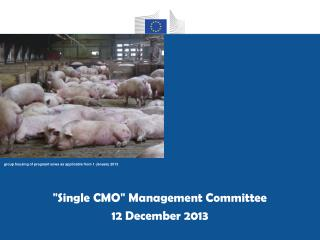 """ Single CMO ""  Management Committee 12 December 2013"